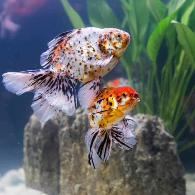 Fish Choices For Beginners With Some Information To Know-