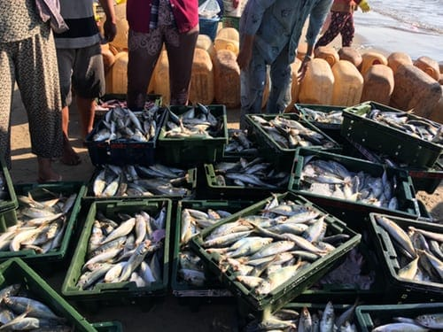 Multispecies Fishery And Sea Food Quality