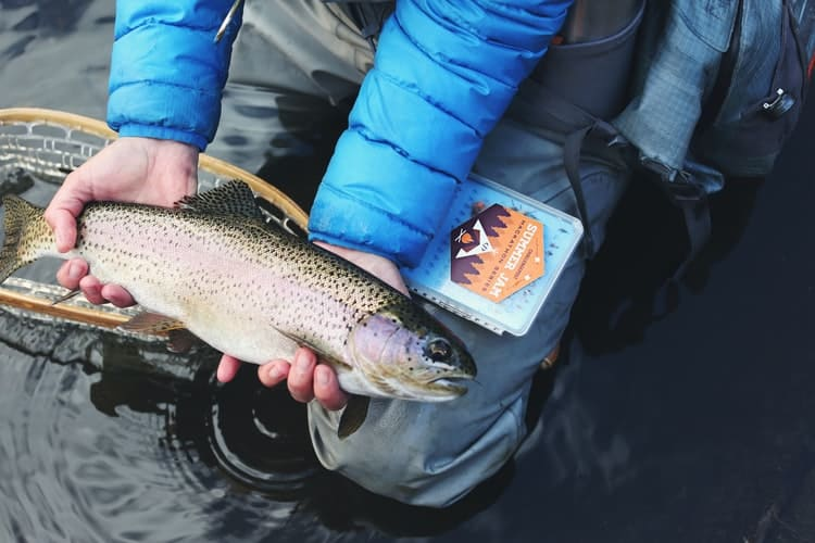 What To Look For In A Fishing Guide