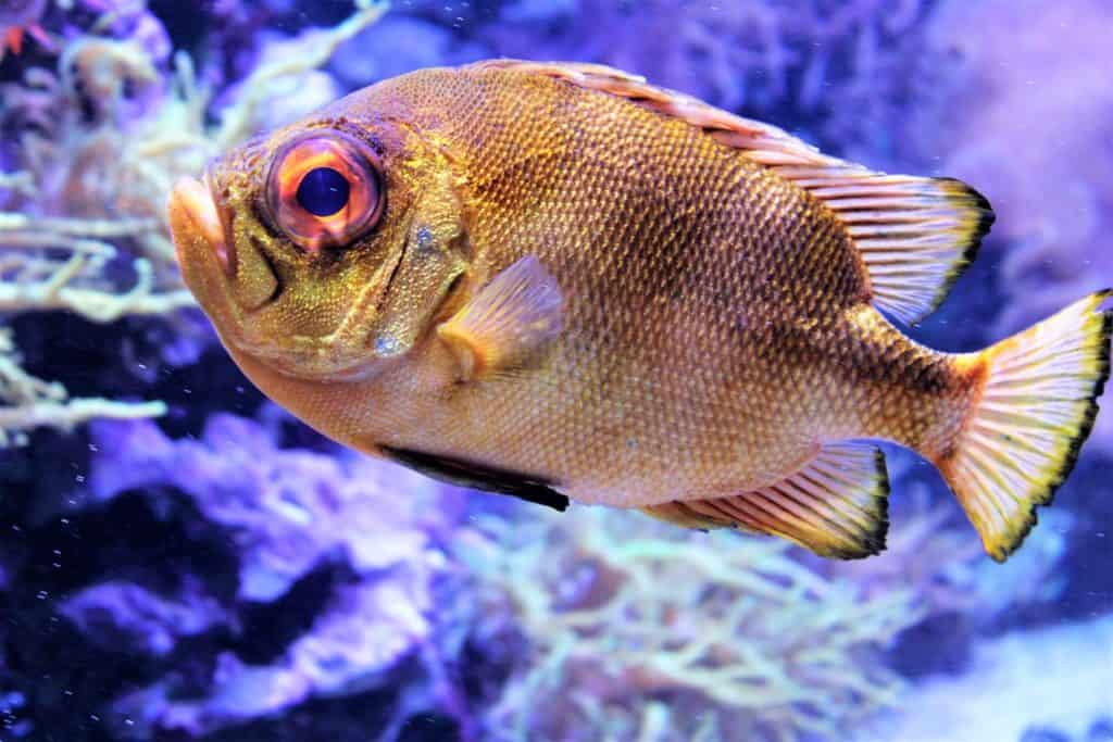 Types Of Fish - What Type Of Fish Are You Fishing For?