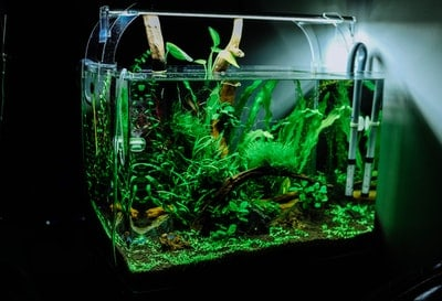 Best Fish Tank Accessories Guide