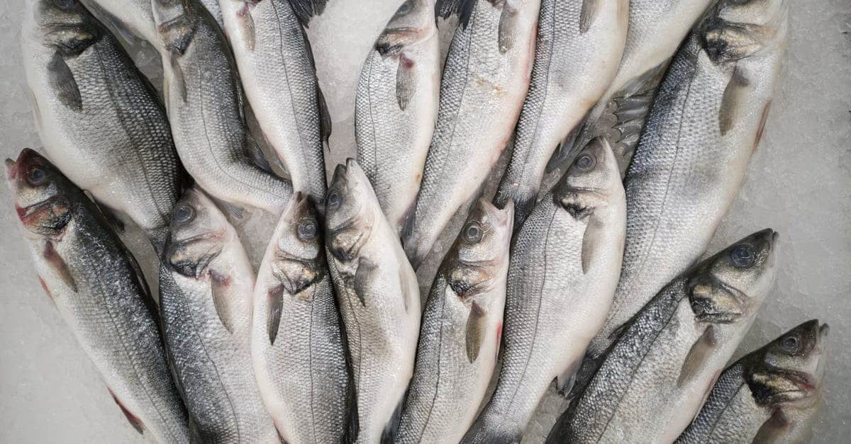 A group of fish